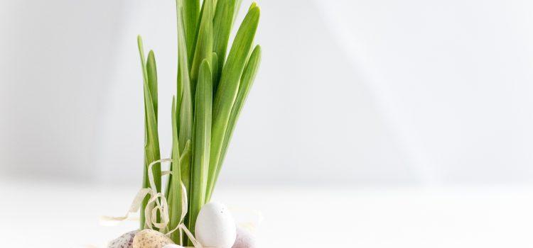 Boa Páscoa!